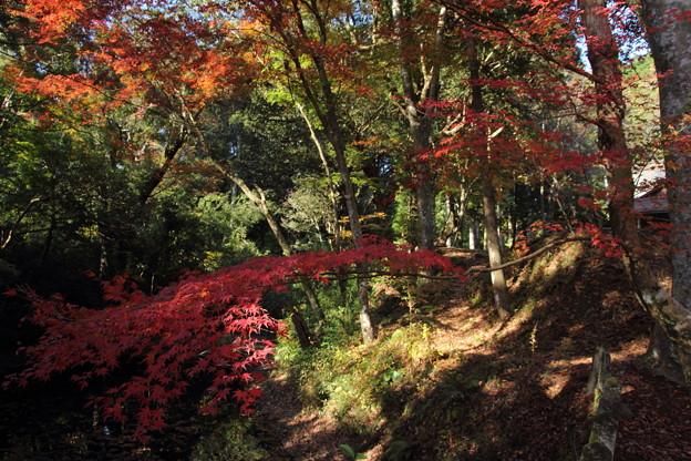 住吉神社の池の脇