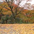 写真: 落ち葉・・湯出神社