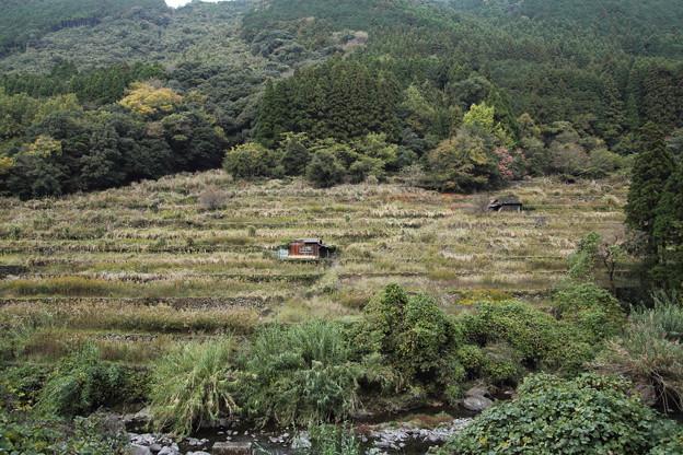 古い棚田の秋