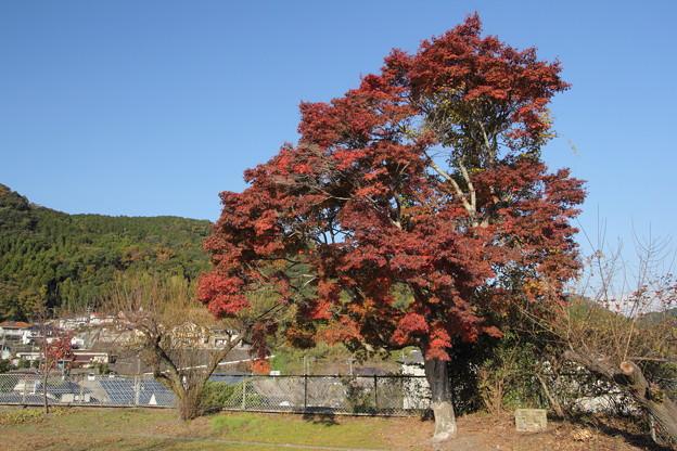 城山墓地の紅葉