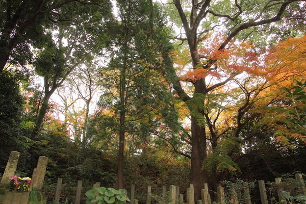 城山の紅葉・・官軍墓地