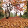 城山の紅葉・・落ち葉がすごい