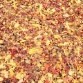 城山の紅葉・・落ち葉