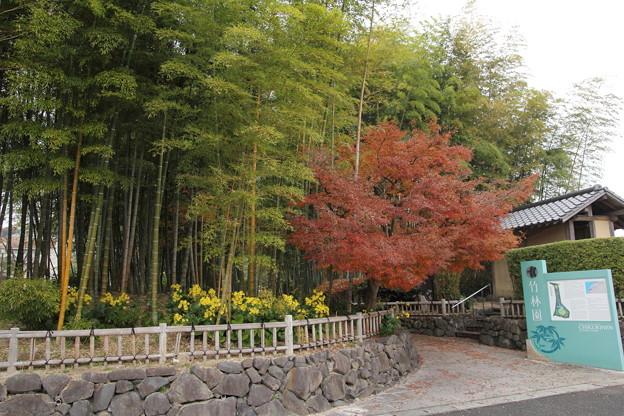 竹林園の紅葉