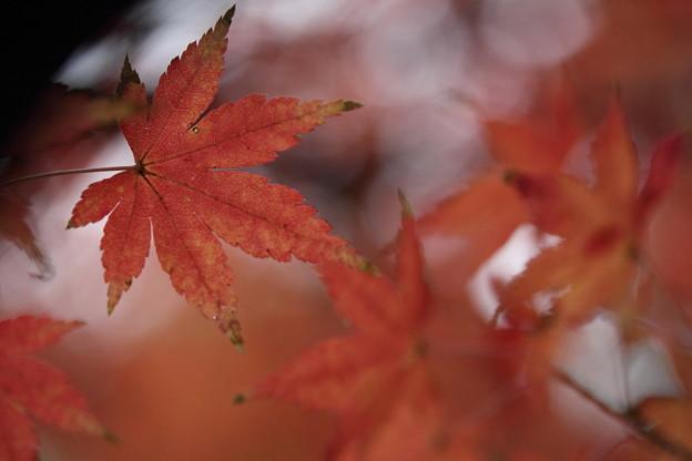 まだ残る紅葉・・竹林園