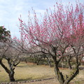 Photos: 梅林園