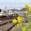 写真: 菜の花とおれんじ鉄道水俣駅