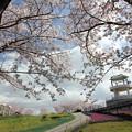 中尾山の春