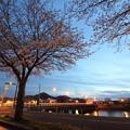 夜桜・・水俣川岸