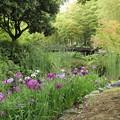 蒲がじゃまする、花菖蒲・・竹林園