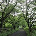 Photos: 緑が鮮やか・・遊歩道