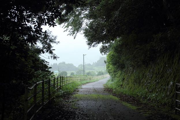 雨の遊歩道
