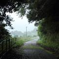 Photos: 雨の遊歩道