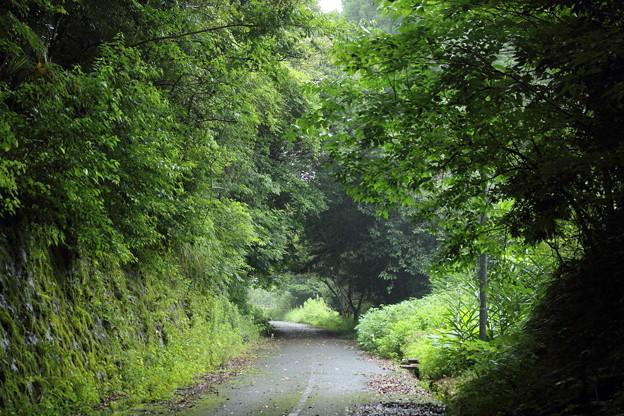 緑鮮やか・・遊歩道