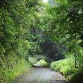 Photos: 緑鮮やか・・遊歩道
