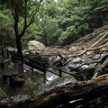 Photos: 倒木がいっぱい