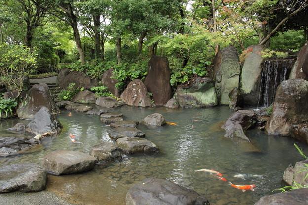 Photos: 竹林園の池に鯉