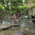 竹林園の池に鯉