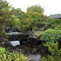 竹林園・・岩はしっとり