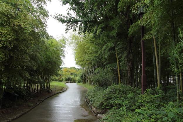 Photos: 竹林園・・静かです
