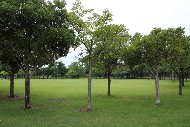 竹林園入り口前の広場
