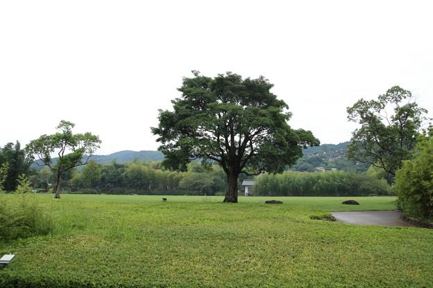 竹林園の広場