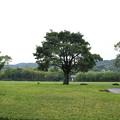 Photos: 竹林園の広場