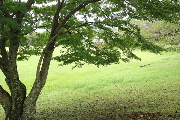 中尾山公園