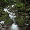 Photos: 寒川水源が流れる渓流