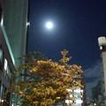 月明かり癒される
