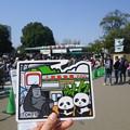 写真: ご当地フォルムカード上野動物園