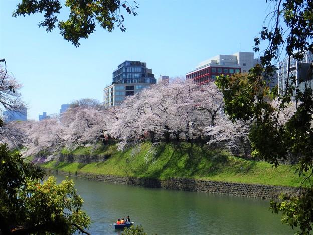 イタリア大使館と千鳥ヶ淵桜