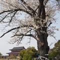Photos: 平城宮跡 大極殿