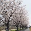 写真: 秋篠川