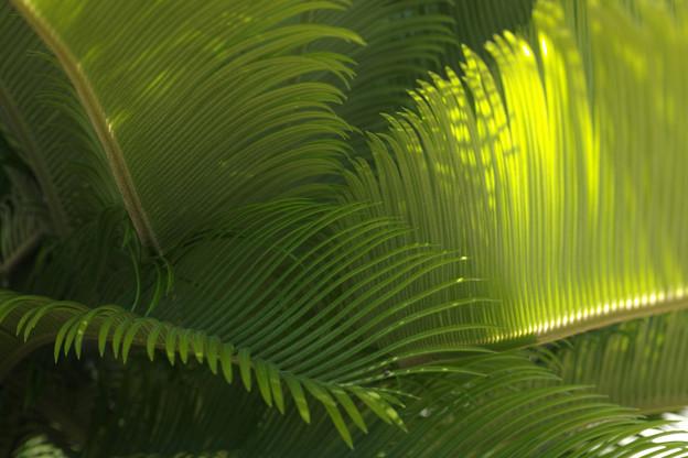写真: 緑風2