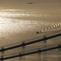 写真: 大橋とともに
