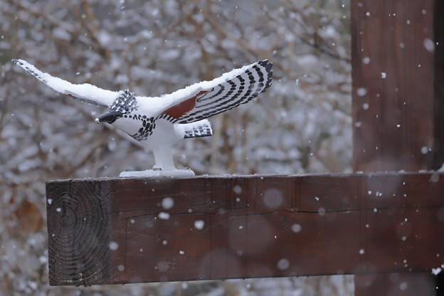 写真: 雪の日も