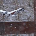 Photos: 雪の日も
