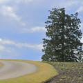 写真: 丘に立つ
