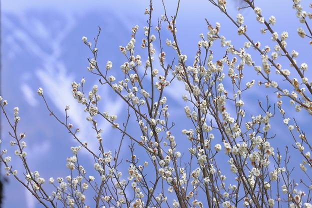 冬から春へ