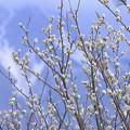 写真: 冬から春へ