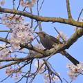 写真: 春の味わい