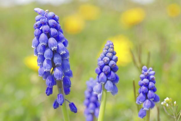 写真: 春の草むら