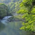 写真: 春渓流