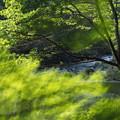 写真: 緑の季節