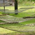写真: 木陰のゆりかご
