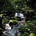 写真: 清流の森