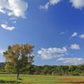 写真: 秋空高く