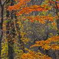 Photos: 彩りの森