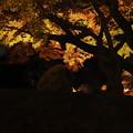 Photos: 夜空を覆って